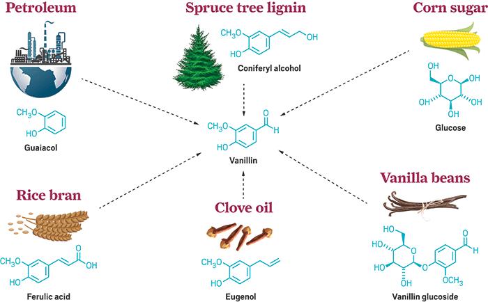Vanillin molecule
